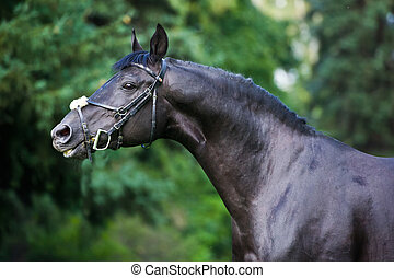 stallion - breeder horse on green background - Portrait of...