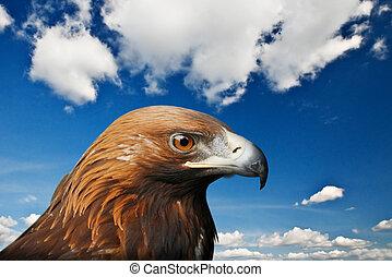 eagle - golden eagle on sky background