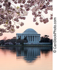 Cherry Blossom and Jefferson Memorial at sunrise - Jefferson...