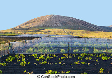water irrigation system on a field with a volcano in the background