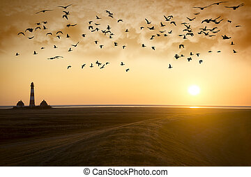 Sunset Lighthouse with migratory birds - Sunset at...