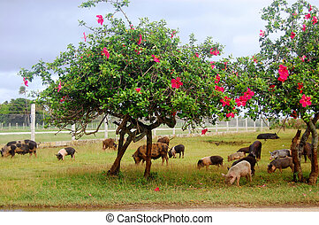 Pigs eat grass under trees with flowers
