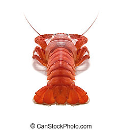 crustacean isolated on white background