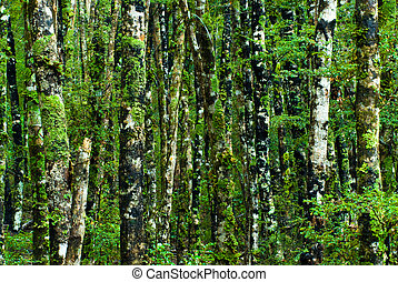 green forest background - green forest with dosh, nelson...