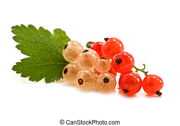 currant - red and white currant isolated