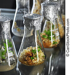 genetic engineering - little plants in vitro genetic...