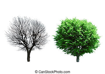 trees - summer and autumn trees isolated
