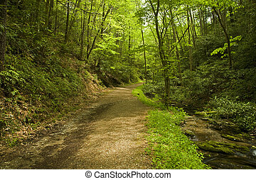 Schoolhouse Gap Trail, Spring, Great Smoky Mtns NP -...