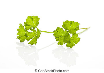 Parsley branch isolated.