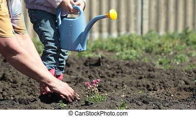 Family Planting Flowers - Grandma and granddaughter planting...