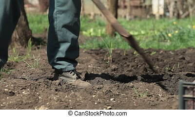 Gardener Planting Potatoes