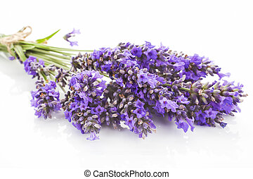 Lavender bunch detail. - Lavender bunch close up isolated on...