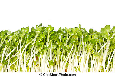 Pea sprouts, organic chinese vegetables frame.