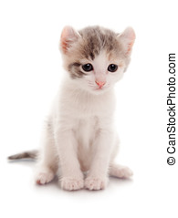 Funny Kitten -  white spotty kitten on a white background