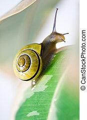 snail - yellow snail on green grass closeup