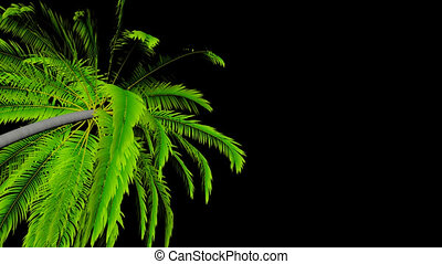 Animation palm tree leaves rustling in the wind, with an...