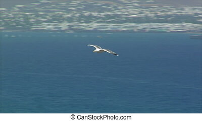 elegant seagull fly by close