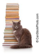 Cat and books  - Grey Cat and old books