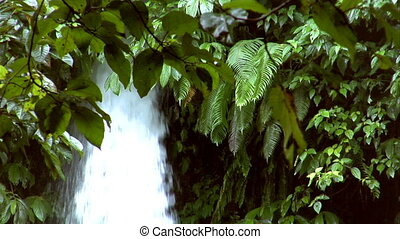 waterfall between tree - 10201 waterfall between tree