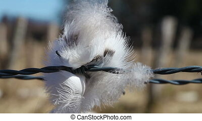 Feather - barbed wire - Feather hanging on barbed wire - in...