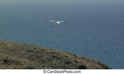 elegant seagull fly - 10509 elegant seagull fly
