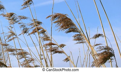 blades of grass waving in wind
