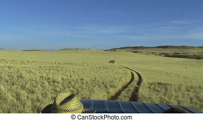 jeep safari in namibia grassland - bumpy driving with jeep...