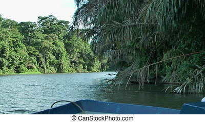 boat gliding trough tortuguero park - Gliding with a boat...