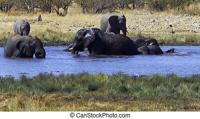 elephants bathing in waterhole