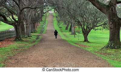 Tourist walking down tree alley - Lonely tourist walking...