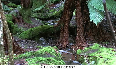 scenic water stream in rain forest - scenic water stream in...