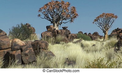 quiver trees in quiver tree forest - quiver trees,also known...