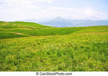 High mountain meadow in sunlight