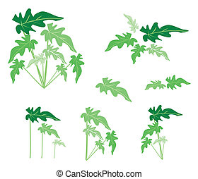 A Set of Philodendron Leaves on White Background -...