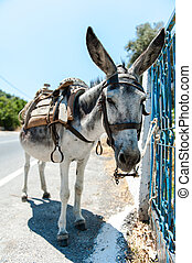 Donkey with a saddle tied to a door on Crete, Greece