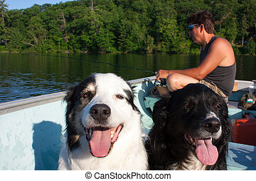fishing buddies - Close up on two dogs sit in a fishing boat...
