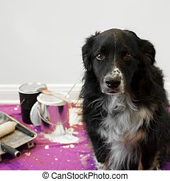 Dog gets into painting project - a shame faced dog at the...
