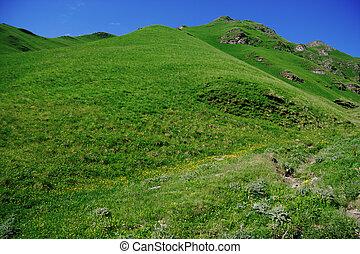 Green grassy hill