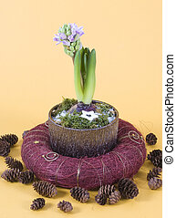 Hyacinths decoration and cones