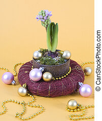 Hyacinths flower pot and christmas decoration