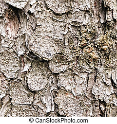 Crust texture of old tree closeup photo