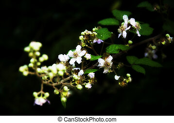 advances - plants and flowers of garden on a black...