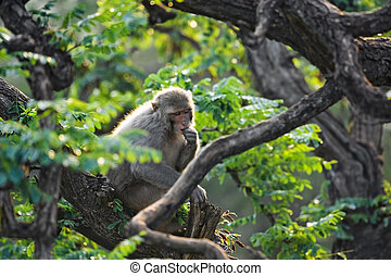 macaque in rainforest sitting on tree