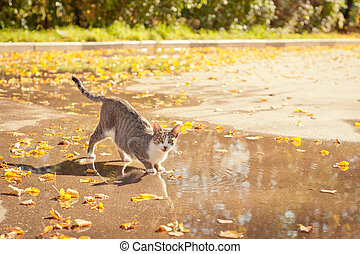 Cat on a watering place. The hot summer, a cat drank water...