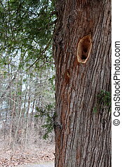 A tree visited by woody woodpecker