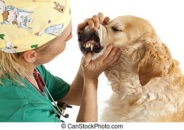 consulta, veterinario