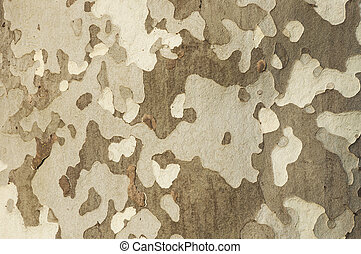 cortex - detail of tree bark with abstract design