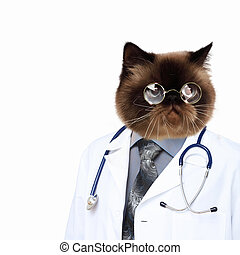 Funny fluffy cat doctor in a robe and glasses collage