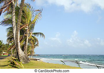 undeveloped Sally Peach beach palm trees on Caribbean Sea...