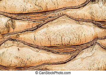 Trunk of a palm tree close-up
